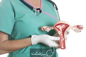 ساختار و عملکرد رحم | پزشکت
