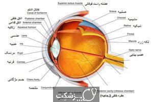 ساختار و عملکرد چشم | پزشکت