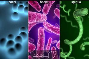 انواع عفونت | پزشکت