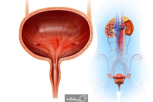 ساختار وعملکرد مثانه | پزشکت