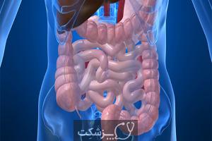 سیستم عضلانی | پزشکت