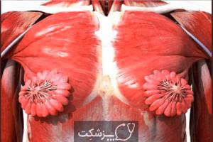ساختار و عملکرد پستان |پزشکت