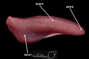 اختلالات شابع زبان | پزشکت