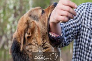 بیماری های قابل انتقال حیوان به انسان | پزشکت