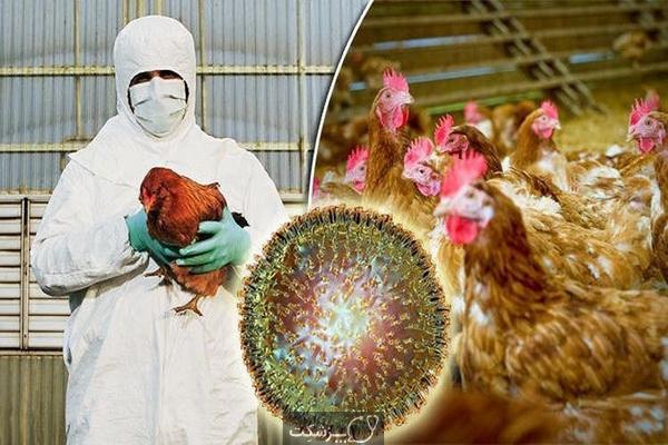 آنفلونزای مرغی | پزشکت