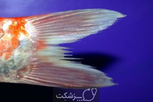 انواع بیماری در ماهی های آکواریومی | پزشکت