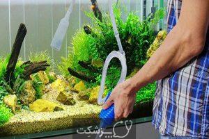 مدیریت بیماری در ماهی های زینتی | پزشکت