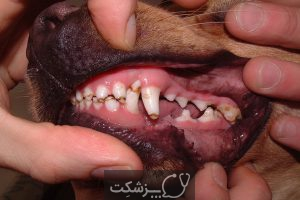 اختلالات دندانپزشکی در سگ ها | پزشکت