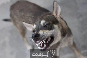 آموزش های لازم برای سگ های خانگی | پزشکت