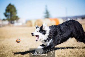 رفع مشکلات رفتاری سگ ها با مشاوره آنلاین | پزشکت