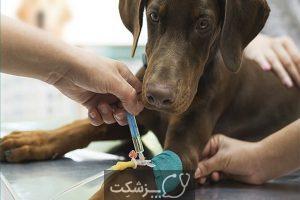 استفراغ در حیوانات خانگی | پزشکت