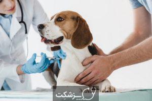 نقش حیوانات خانگی در تربیت کودک   پزشکت