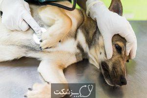 نگهداری سگ های خانگی | پزشکت
