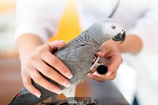 انواع بیماری ها در پرنده های زینتی | پزشکت