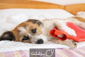 علائم درد در سگ چیست؟ | پزشکت