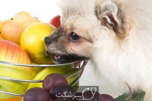 سگ ها چه میوه هایی بخورند؟ | پزشکت