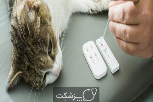 دیابت در گربه های خانگی | پزشکت