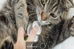 عفونت تنفسی در گربه های خانگی | پزشکت