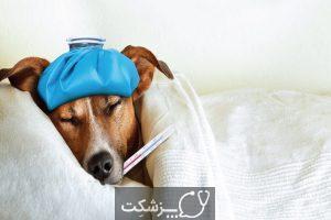شایع ترین بیماری های سگ | پزشکت