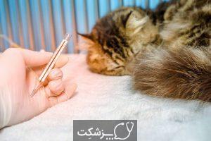 عفونت تنفسی در گربه خانگی | پزشکت