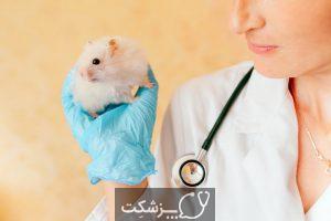 آنچه که باید در انتخاب همستر بدانید | پزشکت