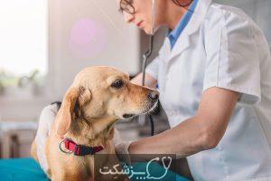یبوست در سگ | پزشکت