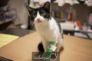 سرطان در گربه های خانگی | پزشکت
