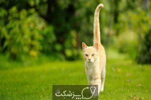 زبان بدن در گربه ها | پزشکت