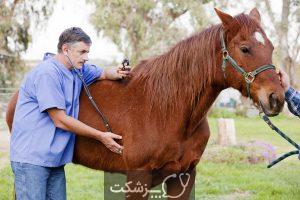 شایع ترین بیماری در اسب ها | پزشکت