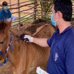 شایع ترین بیماری اسب ها
