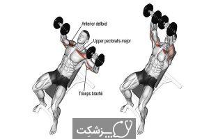 تقویت عضلات سینه در مردان   پزشکت