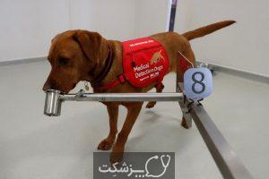 نقش سگ ها در تشخیص کرونا | پزشکت