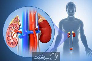 ساختار و عملکرد کلیه | پزشکت
