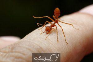 حقایق جالب در مورد مورچه های آتشین 4 | پزشکت