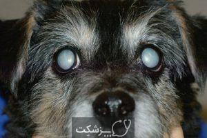 آب مروارید در سگ ها 1 | پزشکت