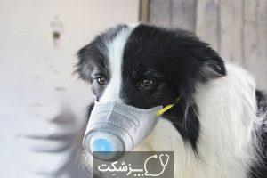 مراقبت از حیوانات خانگی در مقابله با کرونا | پزشکت