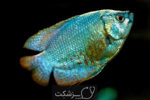 تعیین جنسیت در ماهی ها 2 | پزشکت