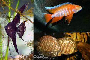 تعیین جنسیت در ماهی ها 3 | پزشکت