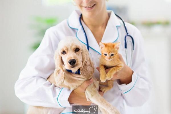 مراقبت از حیوان کرونا مثبت 2| پزشکت