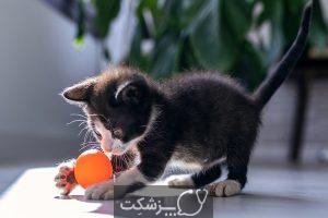 تنگی نفس گربه انواع، دلایل و روش درمانی   پزشکت