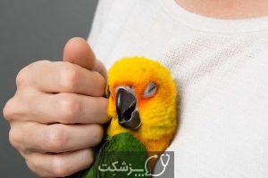 استرس در پرندگان خانگی 4   پزشکت