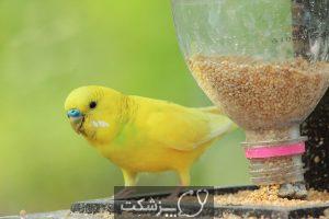 استرس در پرندگان خانگی 3   پزشکت