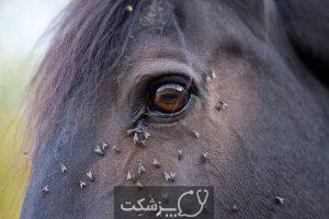 نگهداری از اسب | پزشکت