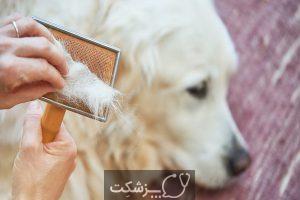 ریزش مو در حیوانات | پزشکت