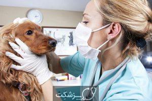 آب مروارید در سگ ها 6 | پزشکت