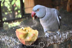 مسمومیت غذایی در پرنده ها 5 | پزشکت