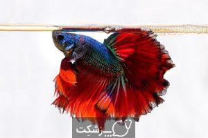 تعیین جنسیت در ماهی ها 1 | پزشکت