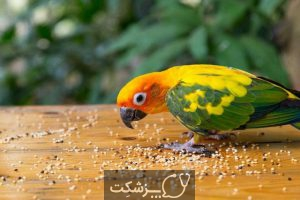 مسمومیت غذایی در پرنده ها 3 | پزشکت