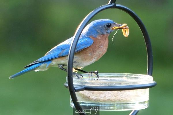 مسمومیت غذایی در پرنده ها 1 | پزشکت