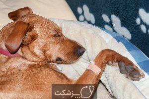 انواع سرطان در سگ   پزشکت